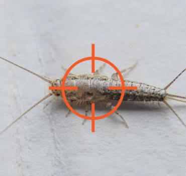 Silverfish & Moth Pest Control