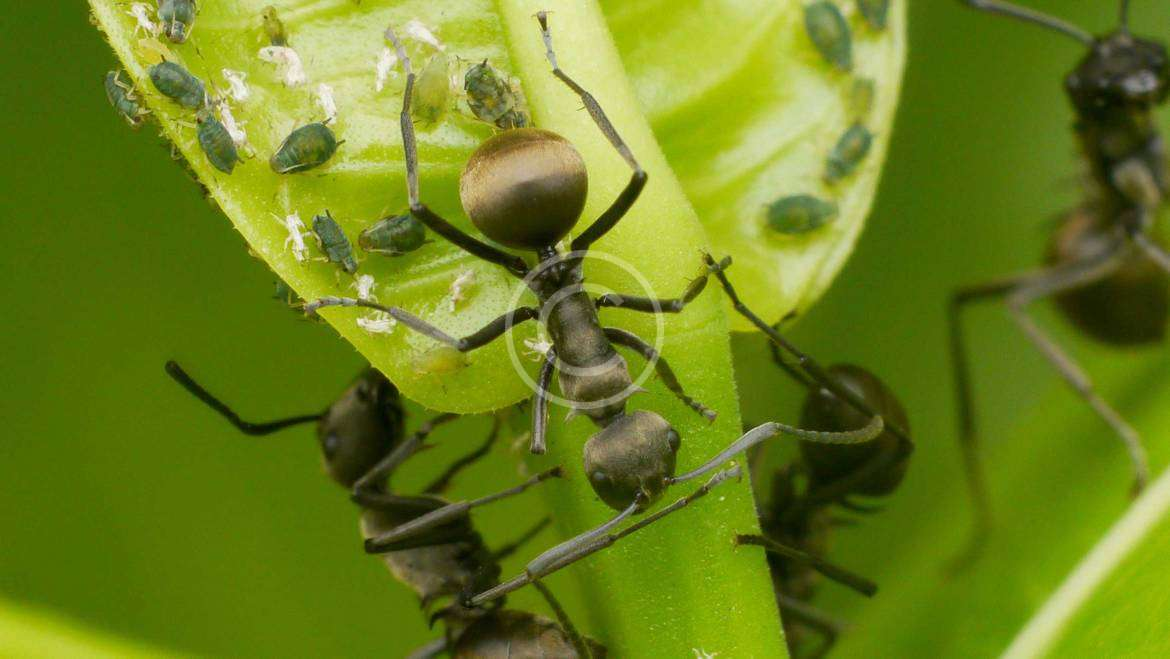 How To Clean and Evict Dangerous Insects